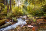 forest, river, sun, sunstar, paradise, harz, germany, 2016, photo