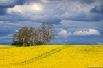 storm, spring, field, rapeseed, hills, brumby, germany, 2020, photo