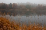 fog, harz, lake, autumn, reed, golden, germany, 2012, Autumn Season 2012, photo