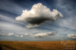 field, corn, brumby, clouds, strange, summer, sommer, formations, wolken, formationen, ungewöhnlich, seltsam, germany, photo