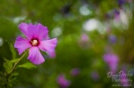 wild, flower, summer, purple, park, blume, lila, sommer, potsdam, germany, photo