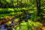 summer, forest, stream, cascade, summer, saxon switzerland, czech republic, 2020, photo
