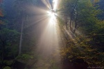 forest, sun, sunstar, autumn, saxon switzerland, germany, 2014, photo