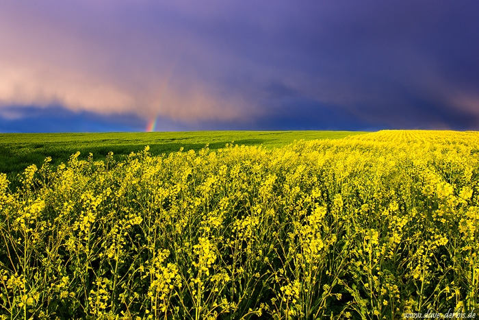 sunset, storm, brumby, field, spring, coleseed, germany, 2016, photo