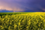 sunset, storm, brumby, field, spring, coleseed, germany, 2016, Latest Photos (Past one Year), photo