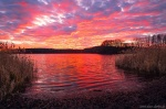 sunset, lake, pink, light, reflection, winter, germany, 2020, photo