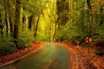road, forest, autumn, fall, roadshot, saxonswitzerland, germany, 2020, photo