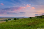 sunset, green, summer, england, sheep, united kingdom, 2014, photo