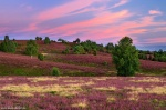 sunset, dream, blooming, flowers, wild flowers, pink, field, germany, 2020, photo