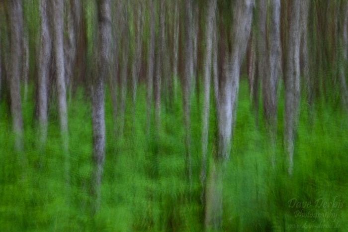 forest, tree, batic sea, weststrand, abstract, germany, 2011, photo