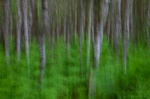forest, tree, batic sea, weststrand, abstract, germany, 2011, Abstract Forest Renditions, photo