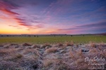 morning, sunrise, brumby, grassland, frost, cold, tundra, sun, germany, photo