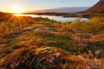 sunset, lofoten, sunstar, fjord, moos, grass, lake, norway