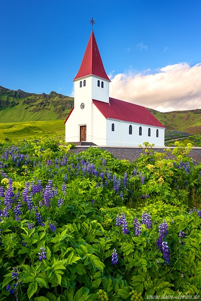 vik, church, lupines, sunset, golden hour, arctic, iceland, 2017, photo