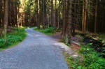 hiking, harz, forest, summer, leistenklippe, hohnekamm, germany, 2013, photo