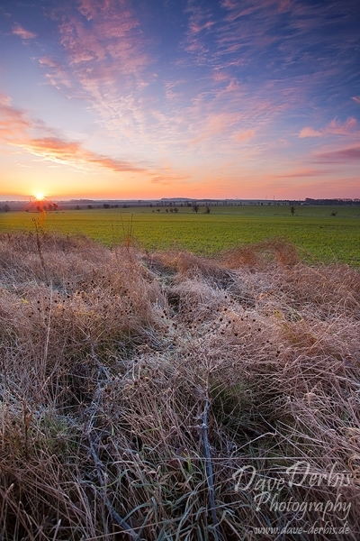 morning, sunrise, brumby, sunstar, grassland, frost, cold, tundra, sun, germany, photo