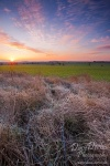 morning, sunrise, brumby, sunstar, grassland, frost, cold, tundra, sun, germany, Landschafts Fotokalender Wildes Deutschland, photo