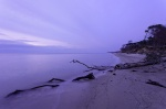 beach, sunset, baltic sea, forest, weststrand, nationalpark, germany, photo