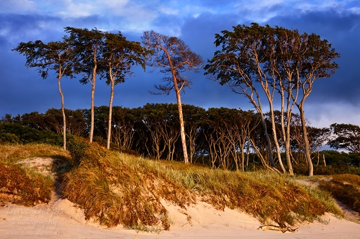 beach, baltic sea, weststrand, sunset, golden hour, trees, ocean, 2011, germany, photo