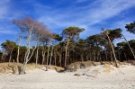 beach, forest, trees, baltic sea, spring, weststrand, germany, photo