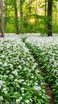 forest, garlic, flower, spring, panorama, leipzig, germany, 2015, photo