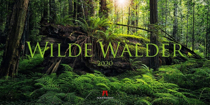 wald, baum, forest, kalender, calendar, 2020, photo