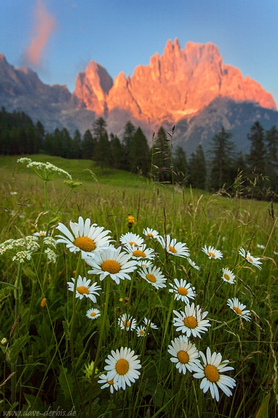 wildflowers, mountain, dolomites, alpenglow, sunset, meadow, italy, 2015, photo