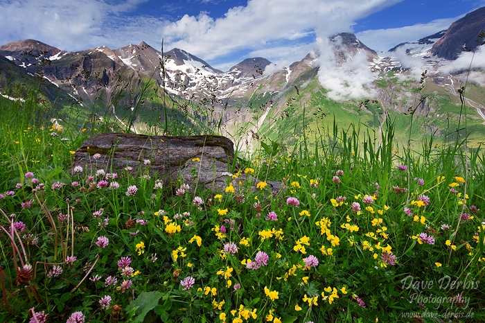 meadow, alpes, mountain, hohe tauern, national park, austria,, photo