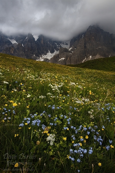 Wildflowers And Storm Dolomites Italy Dave Derbis