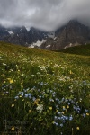 storm, mountains, dolomites, clouds, meadow, wildflowers, passo rolle, passo, rugged, italy, 2011, photo