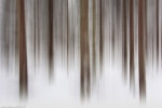 forest, abstract, winter, snow, harz, national park, germany, 2015, Abstract Forest Renditions, photo