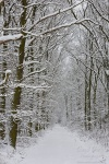 winter, forest, snow, walk, fresh, trail, 2010, germany, photo