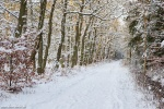 baltic sea, winter, beach, weststrand, forest, snow, germany, photo