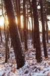 sunset, baltic sea, winter, snow, forest, weststrand, coast, germany, 2015, photo