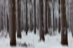 abstract, forest, winter, snow, harz, cold, frozen, tree, fir, germany, 2013, Abstract Forest Renditions, photo