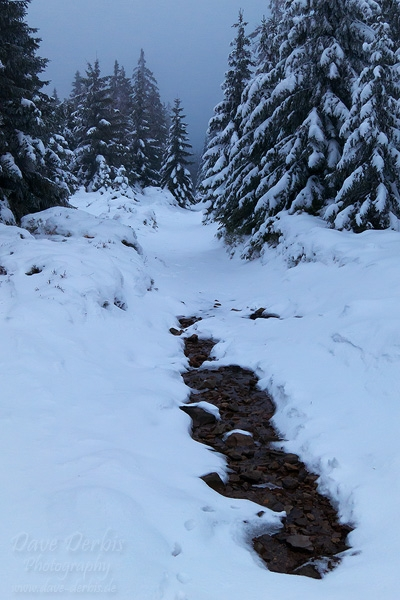 winter, hiking, wolfswarte, harz, snow, nationalpark, photo