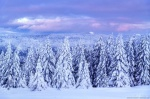 harz, winter, snow, forest, sunset, mountains, germany, 2021, photo