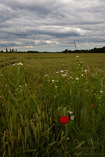 field, countryside, leipzig, clouds, germany, photo